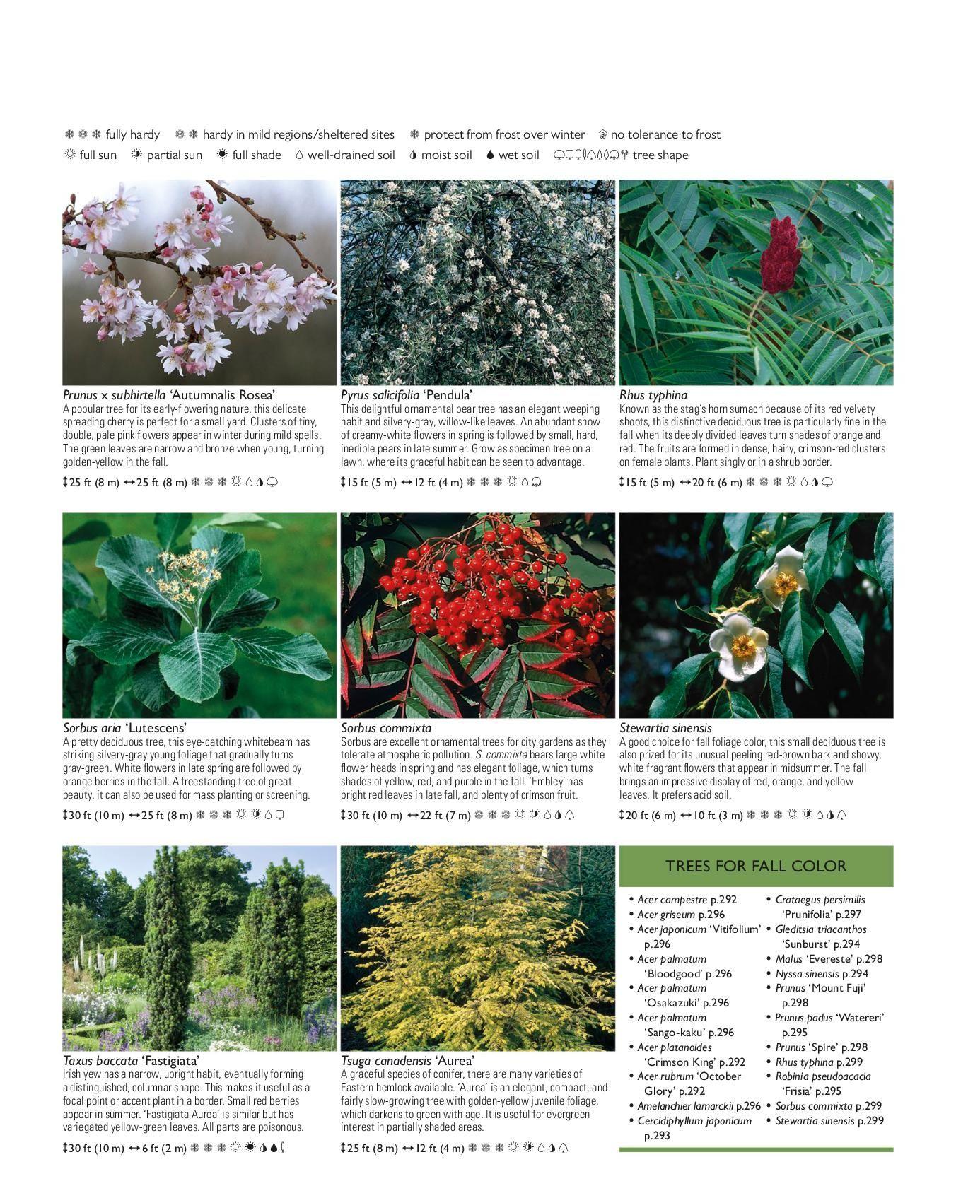 Roin Hill Serviceberry - TheTreeFarm.com   1695x1352