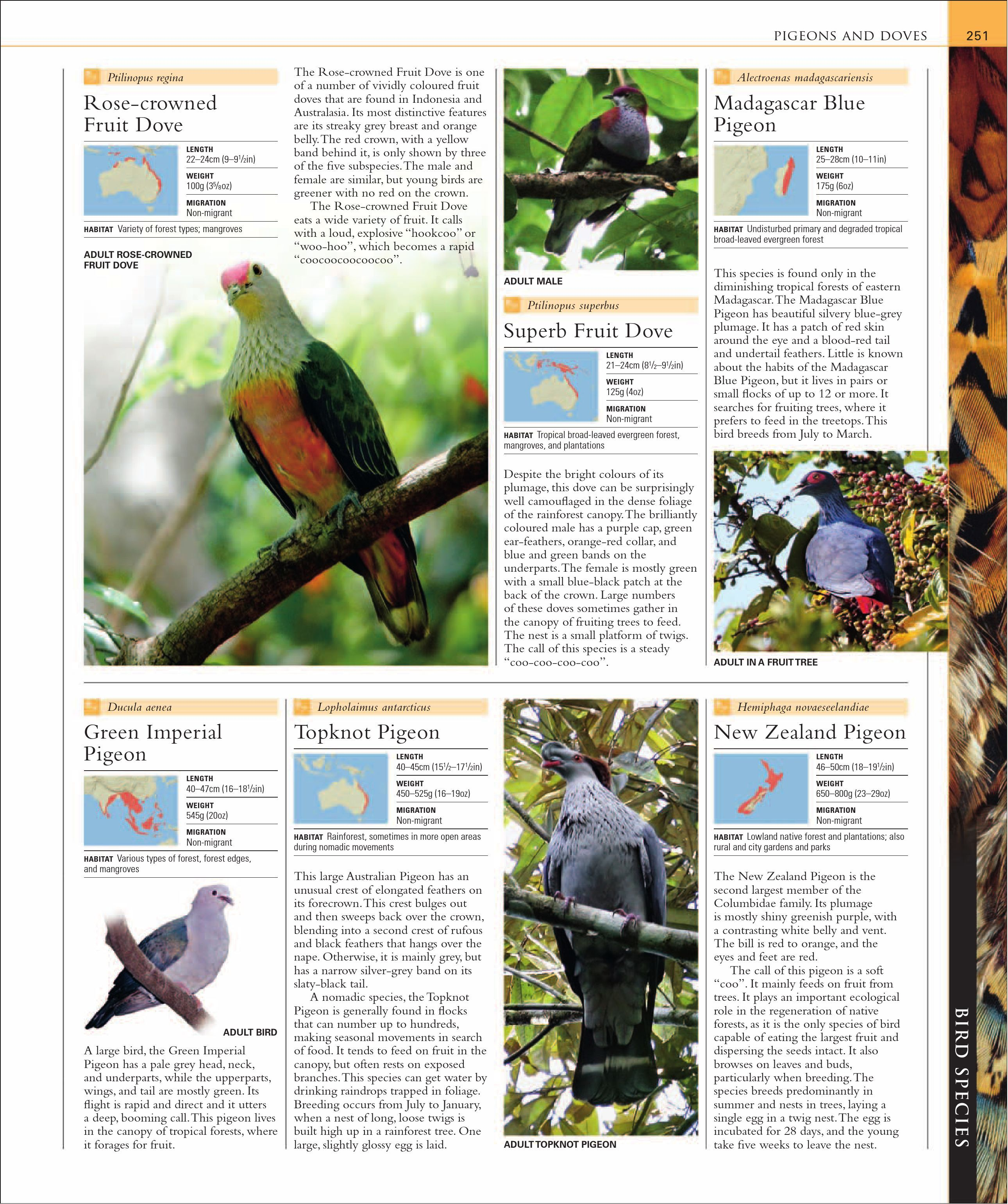 Dk Illustrated Encyclopedia Of Birds Flip Book Pages 251 300 Pubhtml5