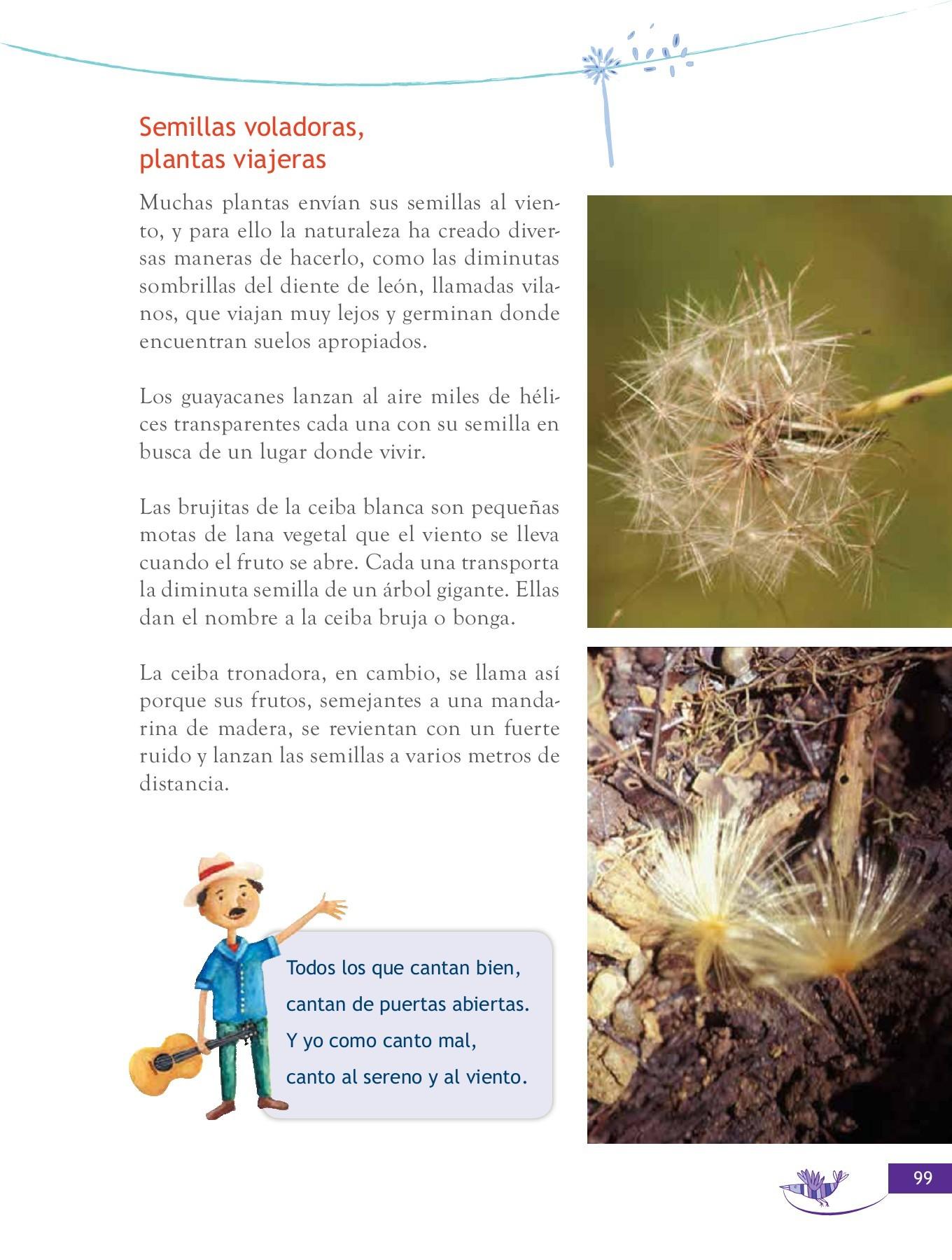 hierba de sauce peludo para la salud de la próstata